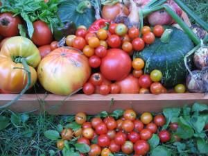 Tomatoes, squash, etc