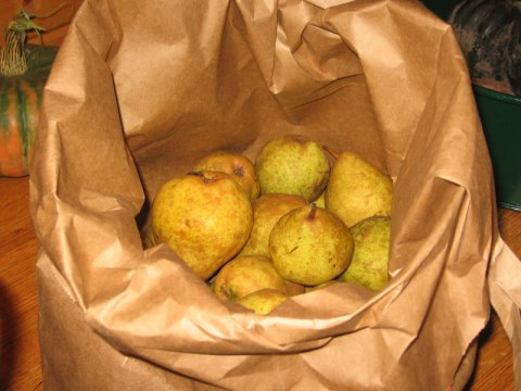 Pears in Brown Bag